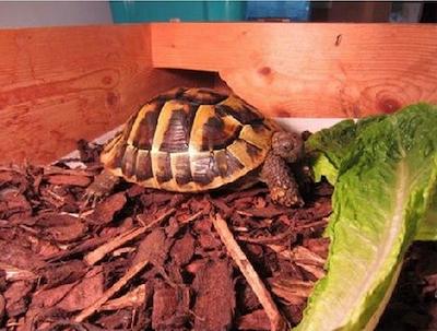 战斗种族人工乌龟冬眠法,果然是毛子干出来的事儿