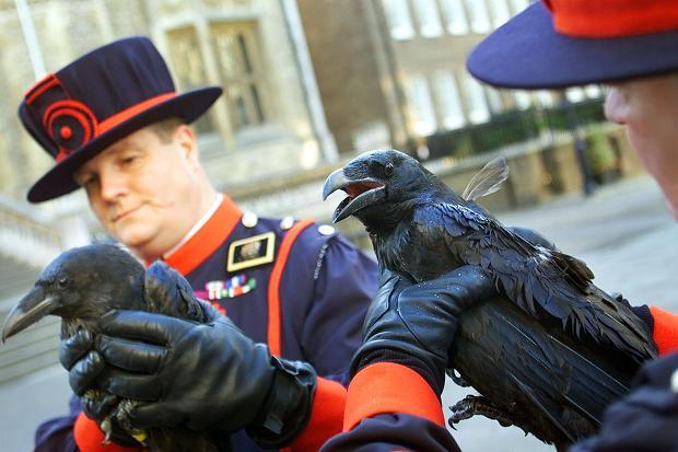 Raven1_120851c