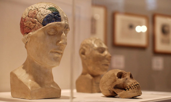 Wellcome Collection Brains Skulls