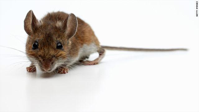 t1larg.bpa_.mice_.gi_