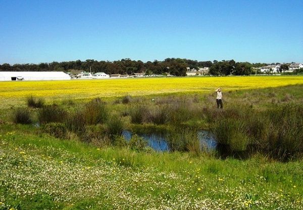Cape_Lowland_Freshwater_Wetlands_in_Cape_Town_6