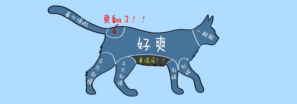 宠物图解1