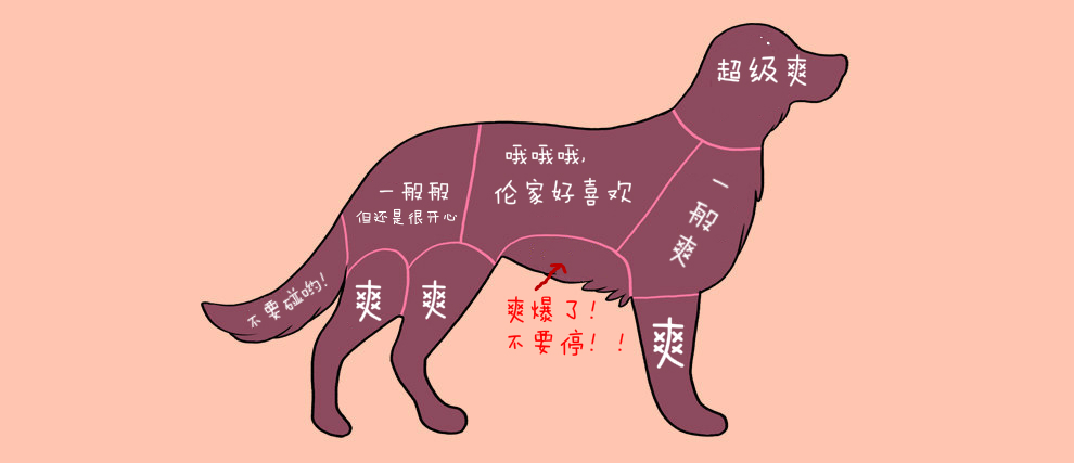 宠物图解2